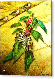 Insect - Butterfly - Sparrow - Happy Summer  Acrylic Print by Yvon van der Wijk