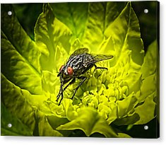 Insect Up Close - Summer Fly Sunbathing On A Yellow Perennial Garden Plant - Macro Photography Acrylic Print by Chantal PhotoPix