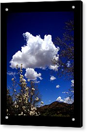 Acrylic Print featuring the photograph Inside The Mind Of Spring by Susanne Still