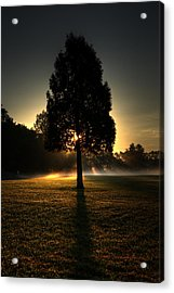 Inspirational Tree Acrylic Print