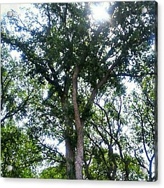 #instadroid #andrography #nexuss #tree Acrylic Print by Kel Hill