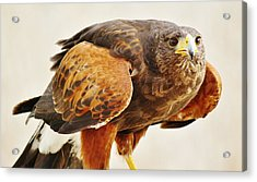 Intense Acrylic Print by Paulette Thomas