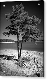 Intertwined Acrylic Print by Southern Photo