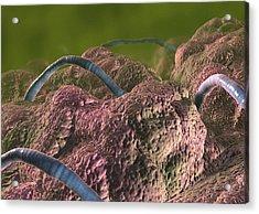 Intestinal Parasites, Artwork Acrylic Print by David Mack