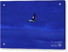 Acrylic Print featuring the photograph Into The Blue by Blair Stuart