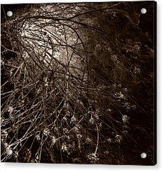 Into The Light Acrylic Print