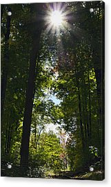 Into The Light Acrylic Print by Peter Chilelli