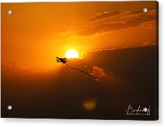 Into The Sun Acrylic Print