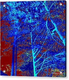 Into The Trees Acrylic Print