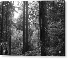 Into The Wood Acrylic Print by Kathleen Grace