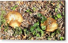 Invasive Shrooms Acrylic Print