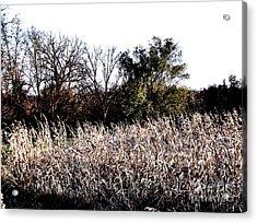 Iowa Cornfield Acrylic Print by Marsha Heiken
