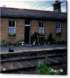 Ireland Series - Crossing Station Dog Acrylic Print by Jim Pavelle