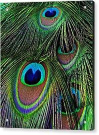 Iridescent Eyes Acrylic Print