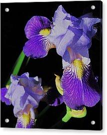Iris-13 Acrylic Print by Todd Sherlock