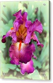 Iris Beauty Acrylic Print