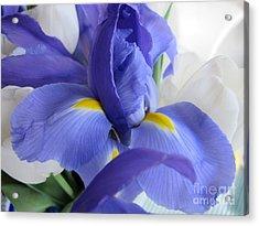Acrylic Print featuring the photograph Iris Bloom by Arlene Carmel