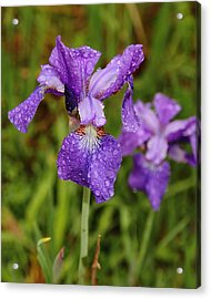 Acrylic Print featuring the photograph Iris Dew by Coby Cooper