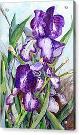 Iris Eyes Acrylic Print by David Ignaszewski