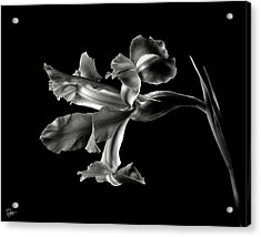 Iris In Black And White Acrylic Print