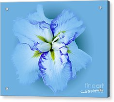 Iris In Blue Acrylic Print