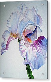 Iris In The Garden Acrylic Print