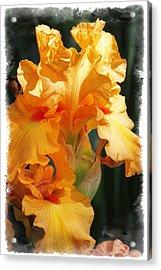 Iris Acrylic Print by Judy Deist