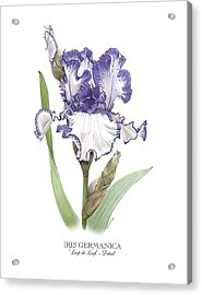 Iris Loop De Loop Acrylic Print by Artellus Artworks
