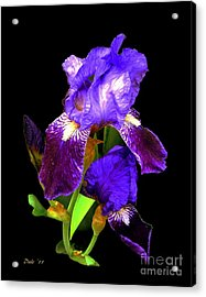 Iris On Black Acrylic Print