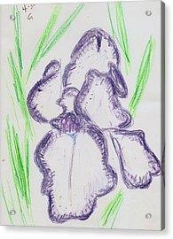 Iris Outlined Acrylic Print