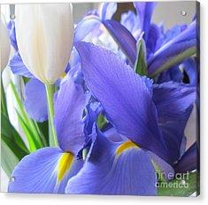 Acrylic Print featuring the photograph Iris Petal by Arlene Carmel