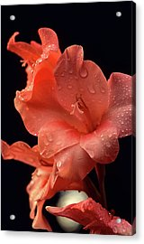 Iris Salmon On Black Acrylic Print
