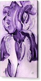 Iris Study In Purple Acrylic Print