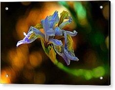 Acrylic Print featuring the photograph Iris by Tam Ryan