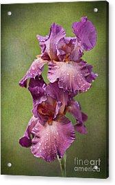 Acrylic Print featuring the photograph Iris With Raindrops by Cheryl Davis