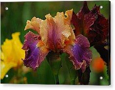 Irises In Indiana Acrylic Print