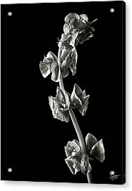 Irish Bells In Black And White Acrylic Print