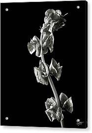 Irish Bells In Black And White Acrylic Print