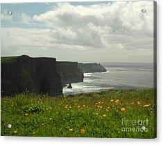 Irish Coast Cliffs Of Moher In Spring Ireland Acrylic Print