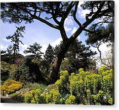 Irish National Botanic Gardens, Dublin Acrylic Print