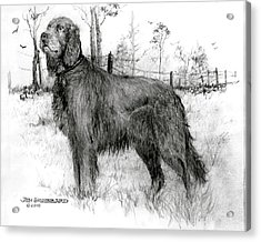 Acrylic Print featuring the drawing Irish Setter by Jim Hubbard