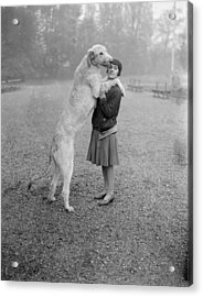 Irish Wolfhound Acrylic Print by Bellamy