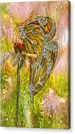 Iron Butterflys Acrylic Print by Jack Zulli