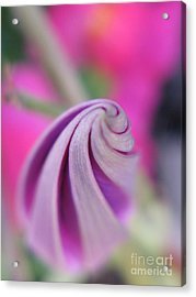 Acrylic Print featuring the photograph Irresistable Photography by Tina Marie