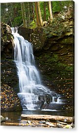 Is It Cottonwood Acrylic Print