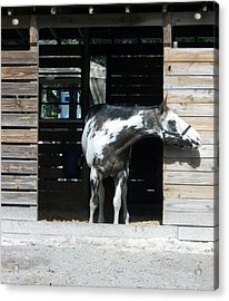 Is It Safe To Come Out Acrylic Print
