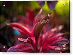 Island Bromeliad Acrylic Print by Mike Reid