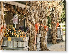 Isoms Orchard In Fall Regalia Acrylic Print by Kathy Clark