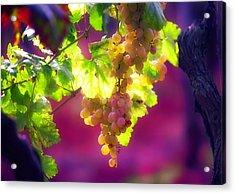 Istrian Grapes-rovinj Acrylic Print