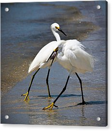 It Takes Two To Tango Acrylic Print by Vicki Jauron